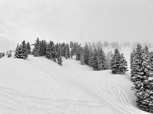 Snowy Landscape From Wildcat Lift